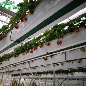 空中草莓无土栽培